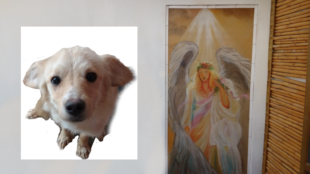 a-little-dog-looking-up-and-a-painting-of-a-guardian-angel