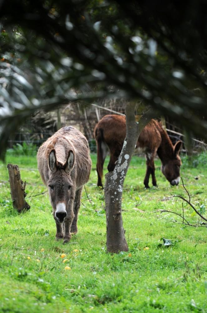 blog_Termas-da-Azenha_Joao-the-donkey