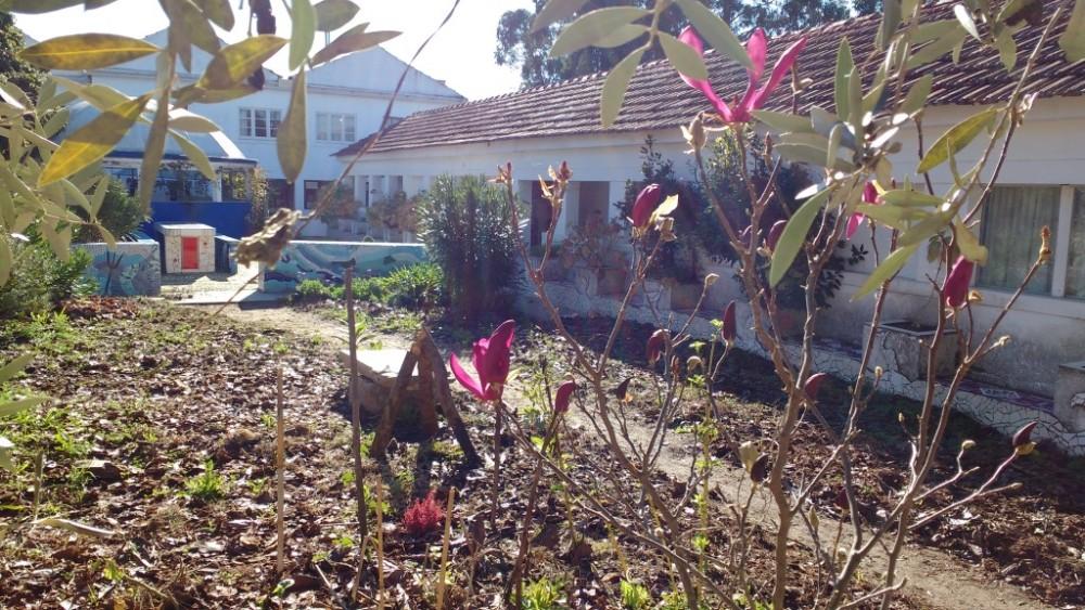 blog_Flintstone-methode_magnolia-in-bloei-in-november