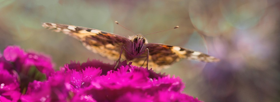 blog_ButterflyGarden