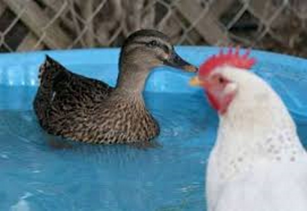 blog_alle-eendjes-zwemmen-in-het-water