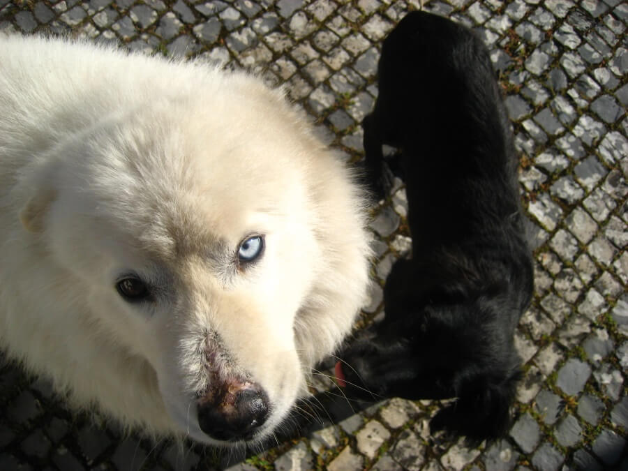 blog_comes-a-dog-at-the-doctors