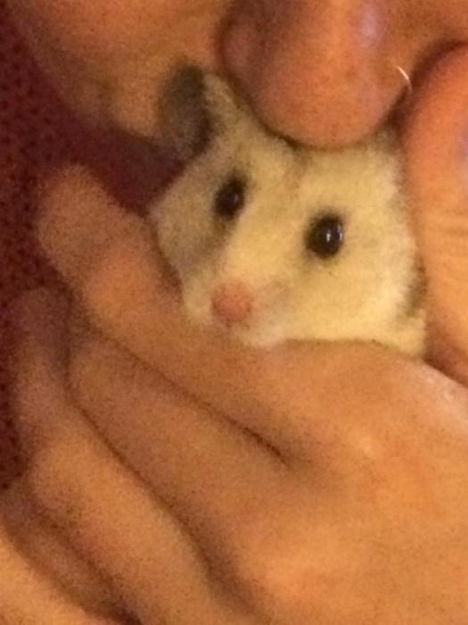 blog_mozaiekmakende-koninginnen_Henk-de-hamster