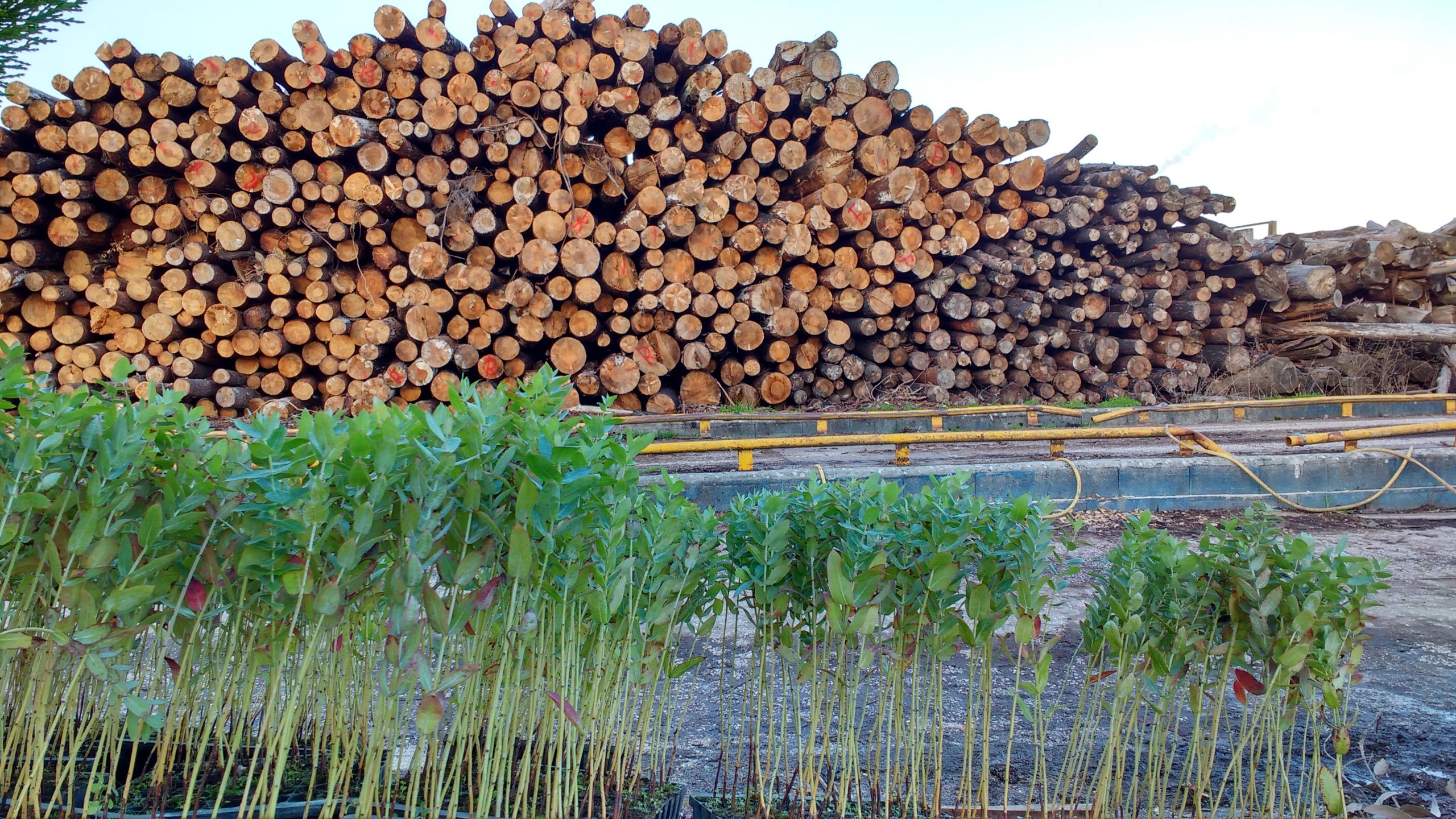 Portuguese-nature-part-2-Deforestation