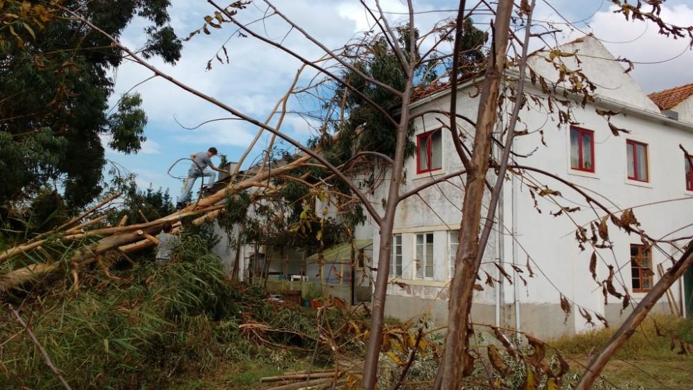 blogue_restauraçao-apos-restauraçao-apos-Leslie