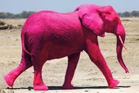 blogue_um-elefante-na-sala