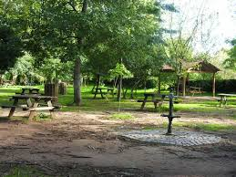 blogue_natureza-portuguesa-parte-1-chicoria