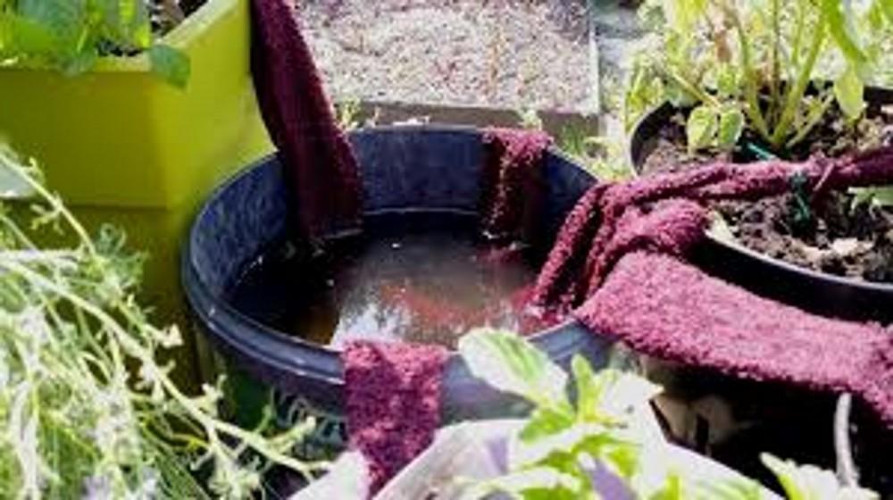 blog_super-tip-for-your-vegetable-garden