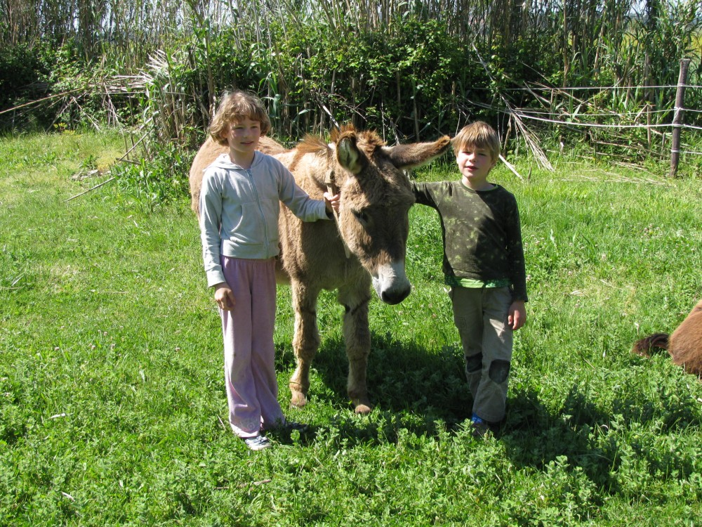 blog_Termas-da-Azenha_Jooa-the-donkey
