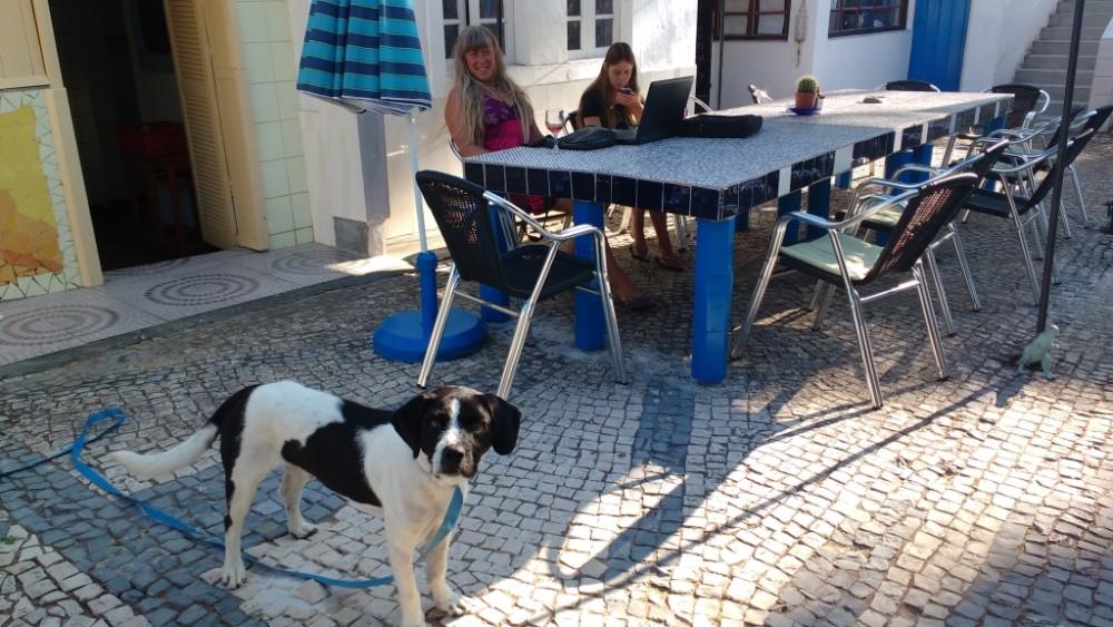 blogue-Termas-da-Azenha_cachorro-afortunado