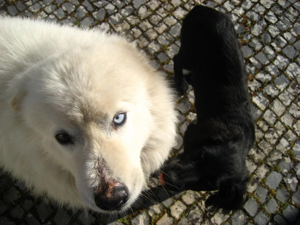blog_schattige-baby-hondjes