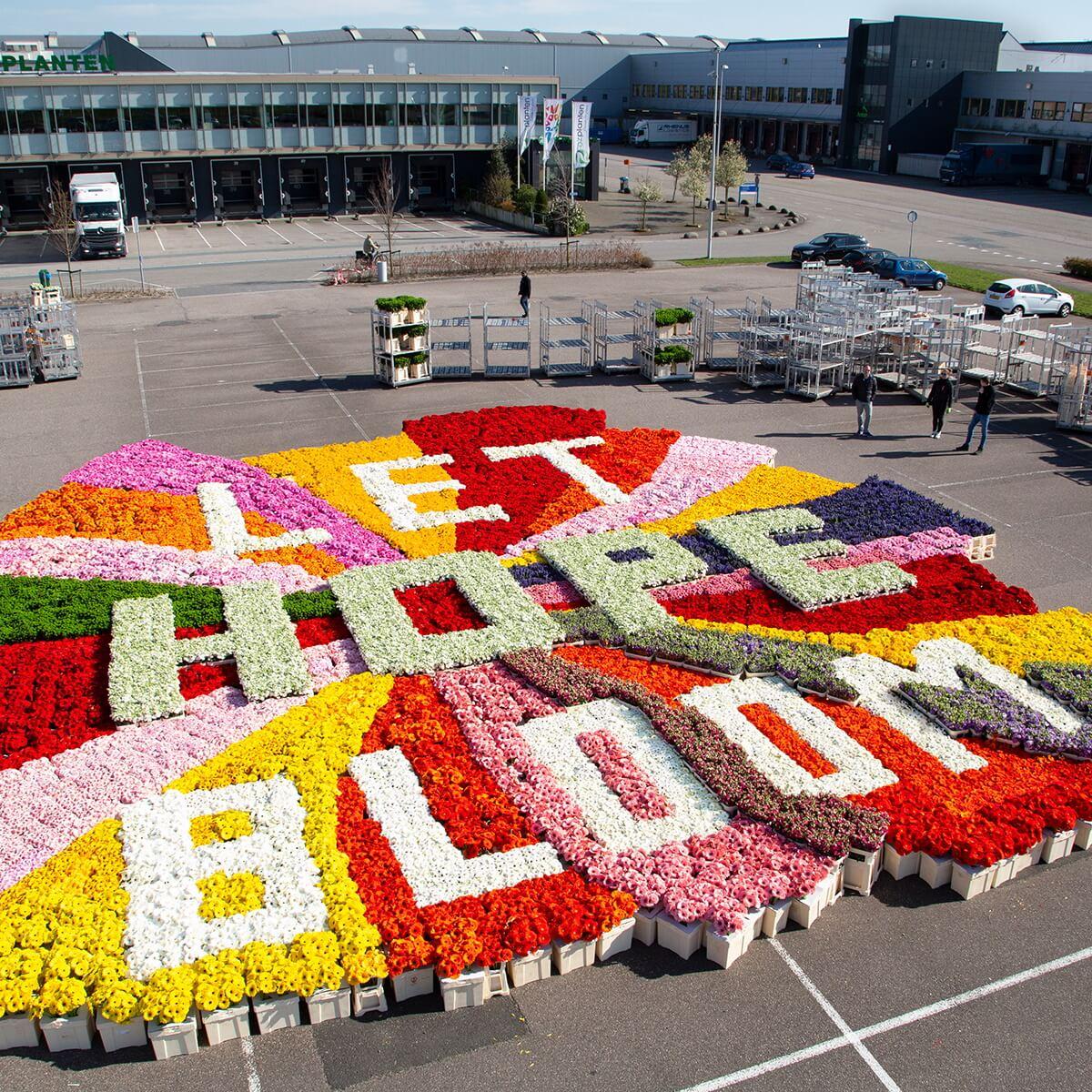 trabalho-de-arte-com-tulipas-chamado-let-hope-bloom