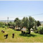 camping-geiten-op-de-heuvel-1
