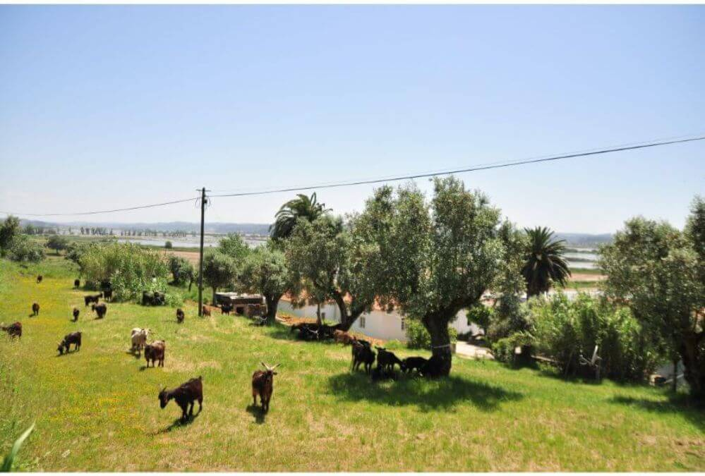 camping-goats-on-the-hill