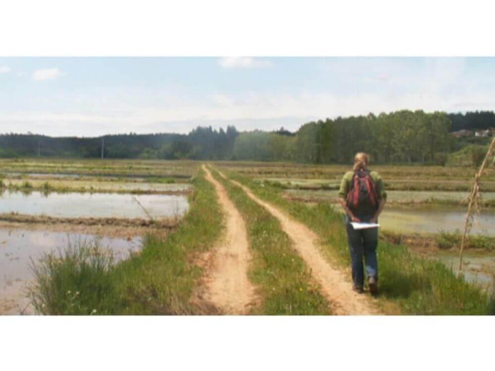 um-passeio-atraves-os-campos