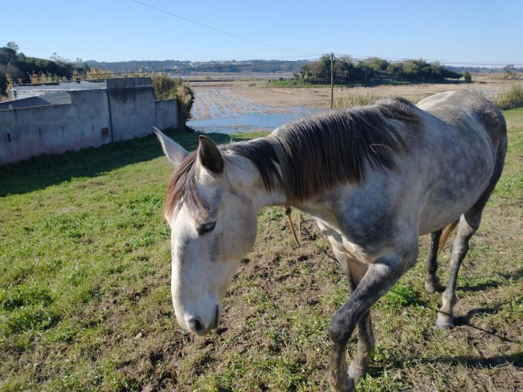 blog_paard-in-portugal